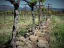 Kesner Chardonnay Rockbreak Vineyard 2016