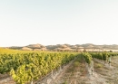 Tatomer Pinot Noir Kick-on Ranch 2018